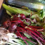 Harvest of Beetroot & Onions